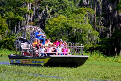 Florida Dolphin Tours from Orlando