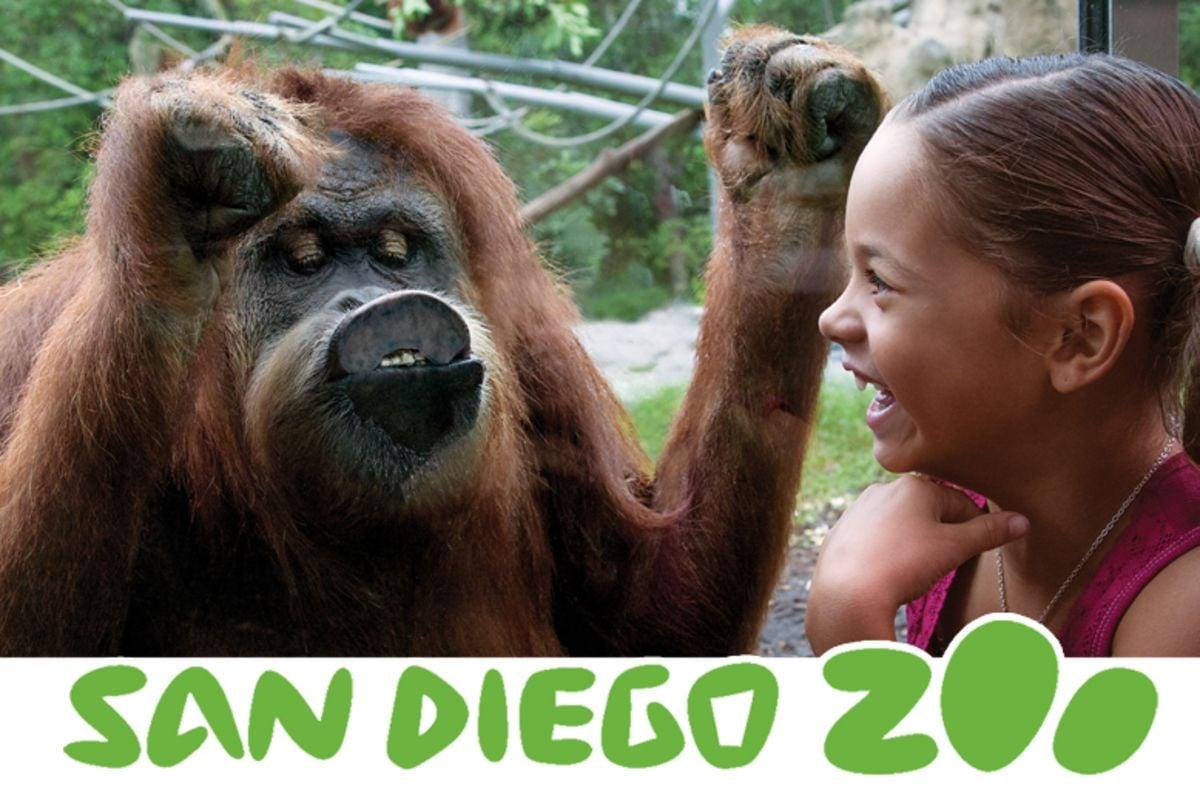 San Diego Zoo Discount Tickets Starline Tours