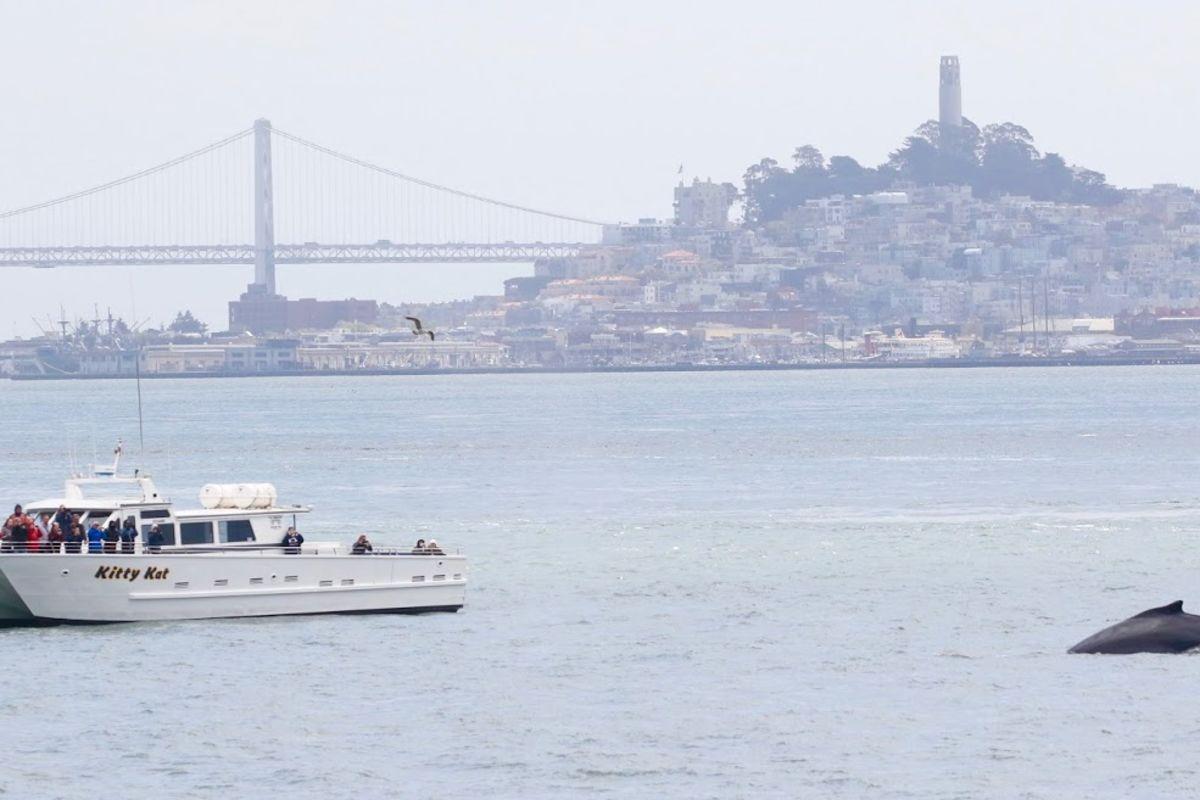 San Francisco Bay Tours Boat Cruises Around The Bay