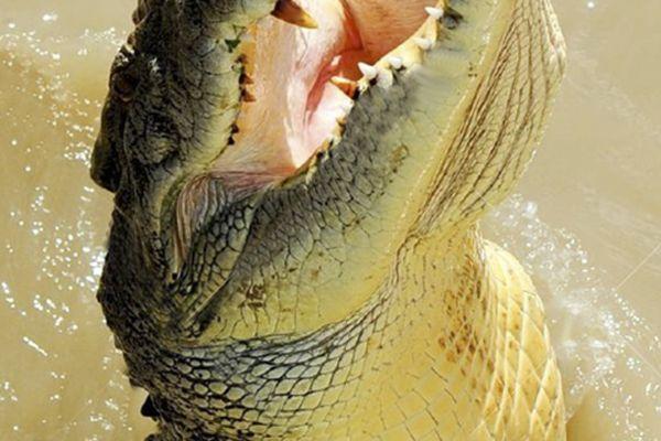 Terrifying Nile Crocodile