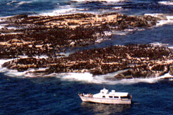 Hout Bay - Seal Island Cruises