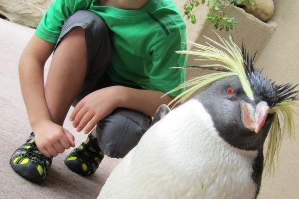 Meet a Penguin up-close