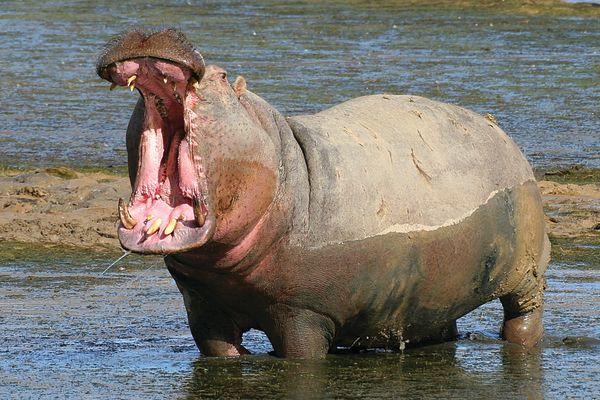 Cape Town Safari Tours