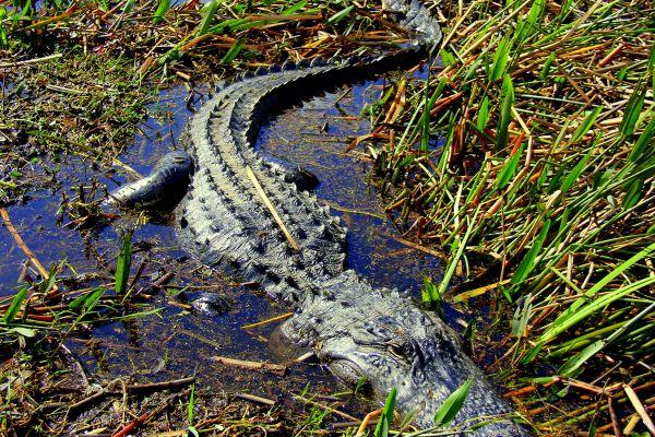 Central Florida Everglades