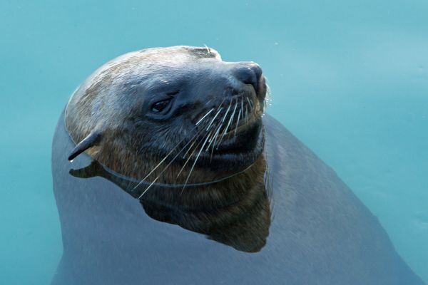 Resident seal
