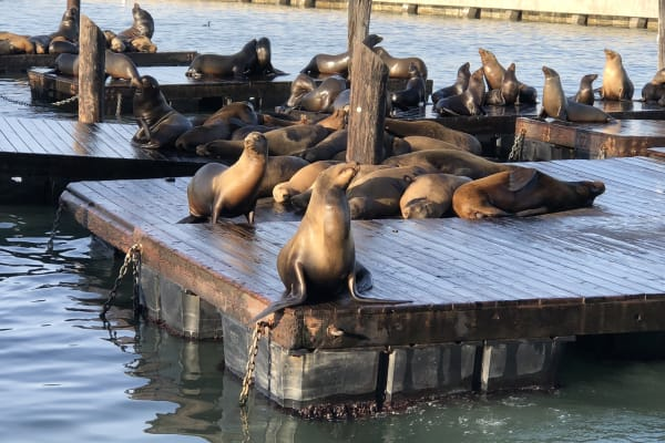 Hop off at Pier 39 to visit the world famous sealions that congregate on the pontoons at the end of the pier.
