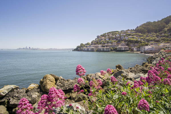 Transfer at the Golden Gate Bridge onto the Sausalito tour and visit this stunning coastal town.