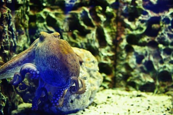 Live Ocean Fauna