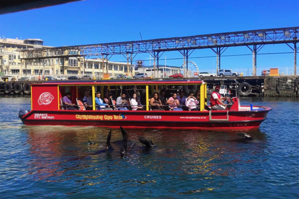 V&A Seal & Harbour cruise