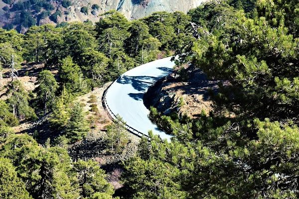 Troodos Forest