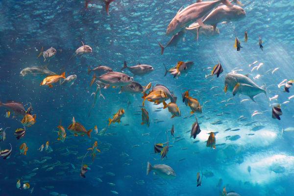 Inside the Lisbon Oceanarium - Parque das Nações