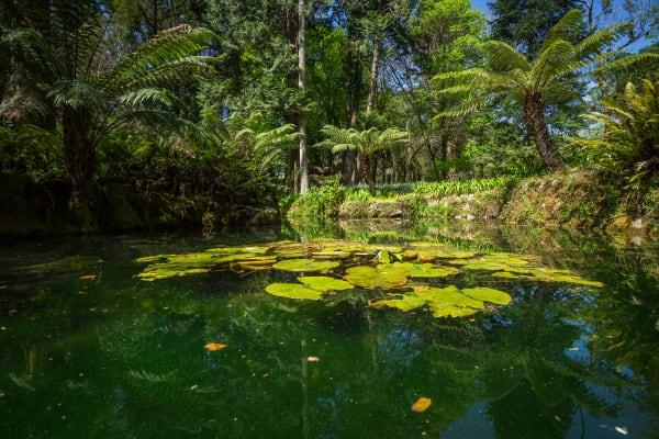 Garden of Pena Palace - Sintra