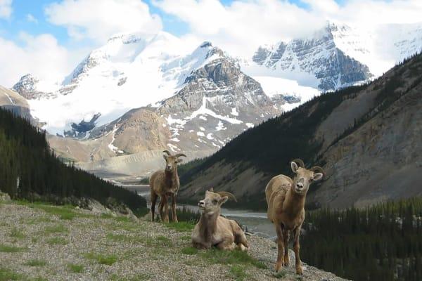 Photo Credit: Travel Alberta