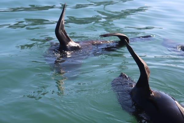 Resident Seals